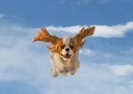 Dummy_FlyingPooch